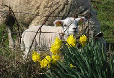 Afbeelding van Lammetjes knuffelen op Schapenboerderij Texel