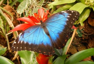 Impressie van Vlinders aan de Vliet
