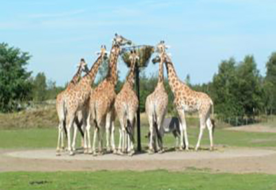 Afbeelding van Safaripark Beekse Bergen