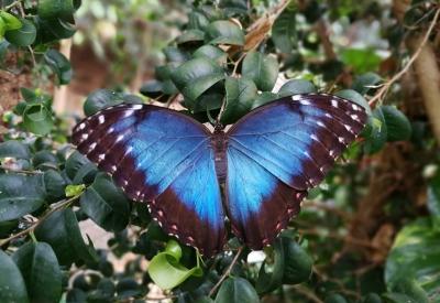 Afbeelding van Vlindertuin Vlindorado