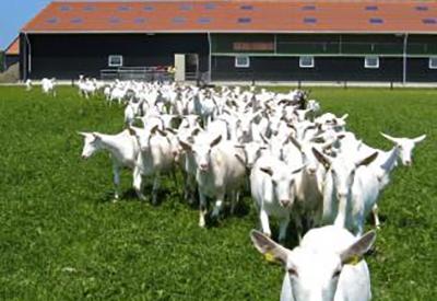 Impressie van Geitenboerderij De Mekkerstee