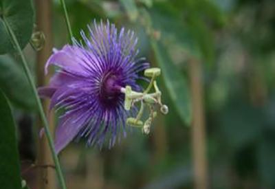Impressie van Vlindertuin de Passiflorahoeve