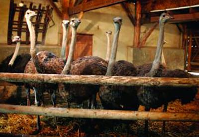 Impressie van Heierhof Struisvogelboerderij