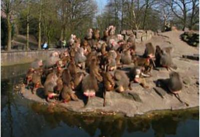 Afbeelding van Dierenpark Emmen