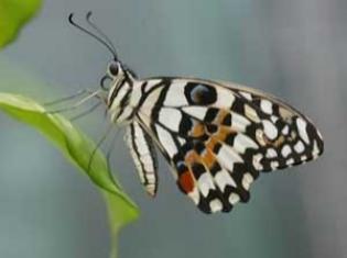 Afbeelding van Vlindertuin de Passiflorahoeve