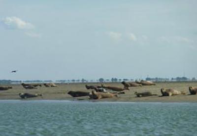 Afbeelding van Frisia rondvaarten